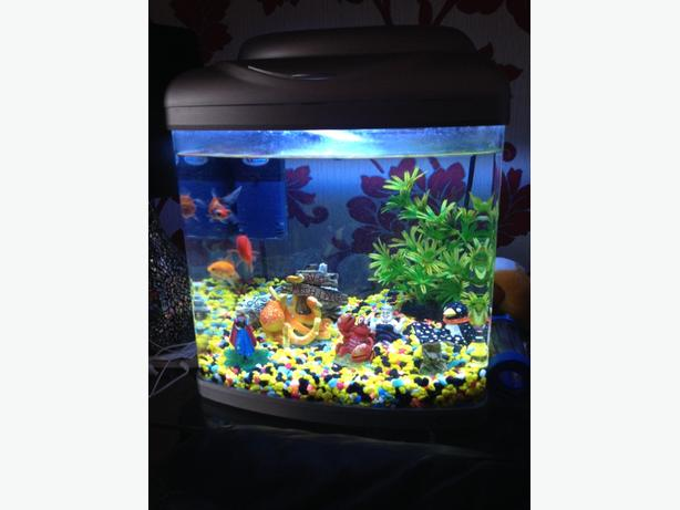 Fish tank for sale tipton sandwell for Used fish tank