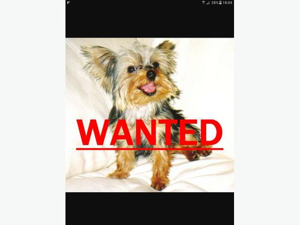 WANTED:a good outdoors ,family friendly dog