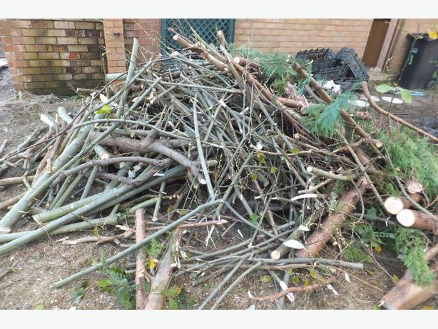 FREE:  FIREWOOD, JUST CUT DOWN TREES AND BUSHES