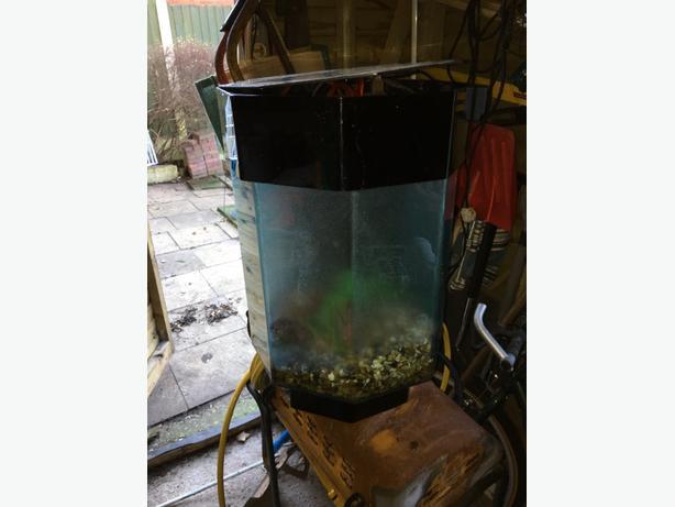 50 pence shaped fish tank