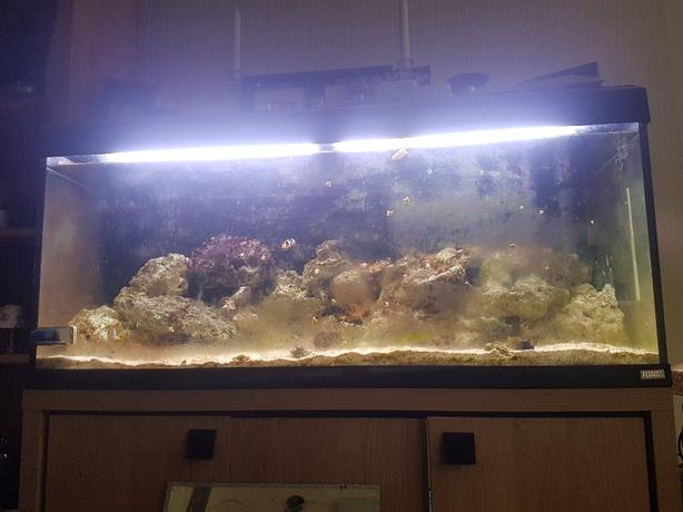 marine tank full set up
