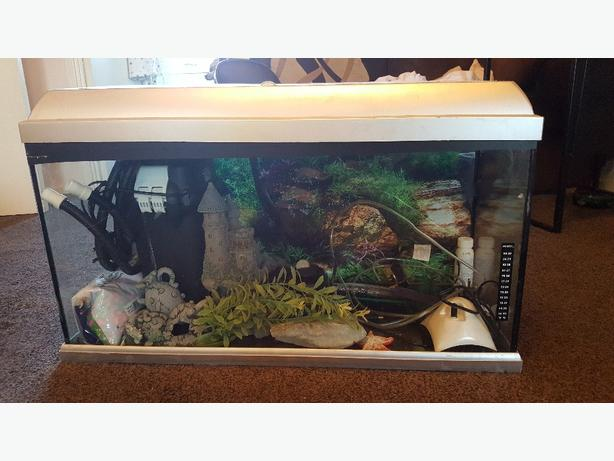 "2ft 8"" fish tank full set up"
