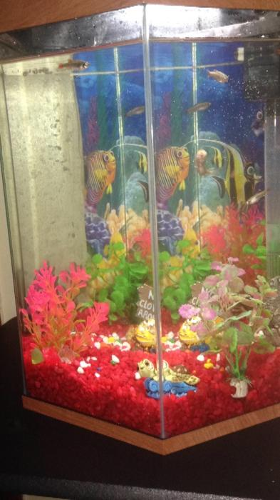Cold water fish with tank walsall wolverhampton for Cold water fish tanks