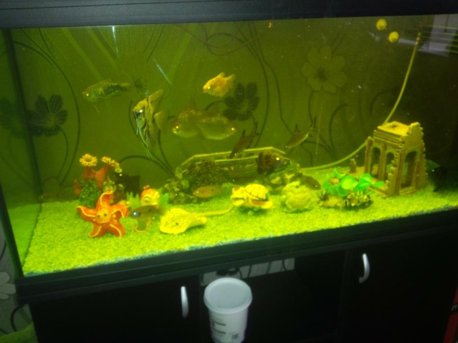 Fish tank and fish tipton sandwell for How much is a fish tank
