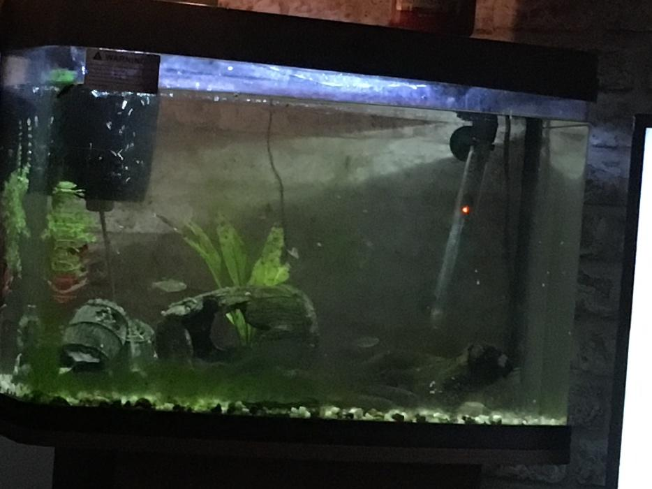 Bow front fish tank and cupboard willenhall dudley for Bow front fish tank