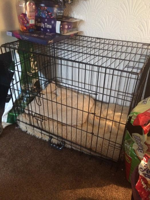 medium dog crate wednesfield wolverhampton With best dog crate for medium dogs