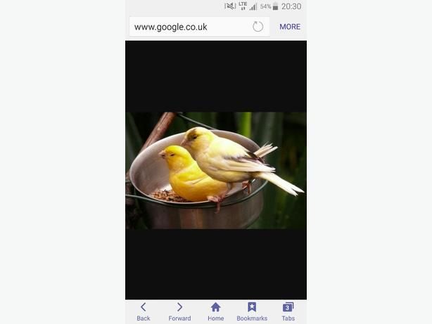 WANTED:  REHOME YOUR BIRDS