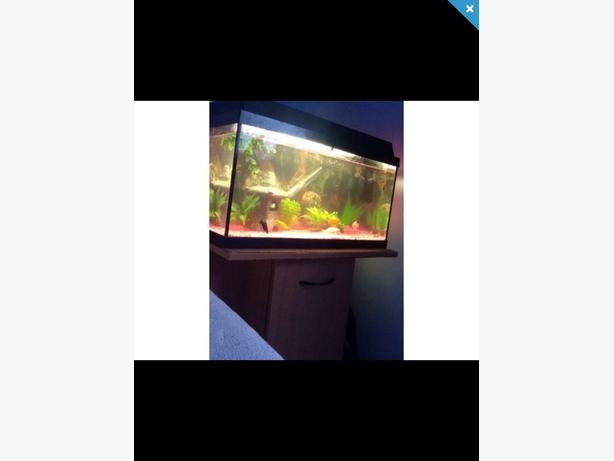 2ft Fish tank and stand