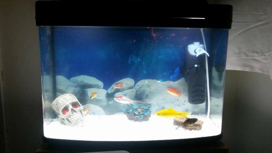 Fish Tank Stands Near Me Fish Tank And Stand Sandwell 40
