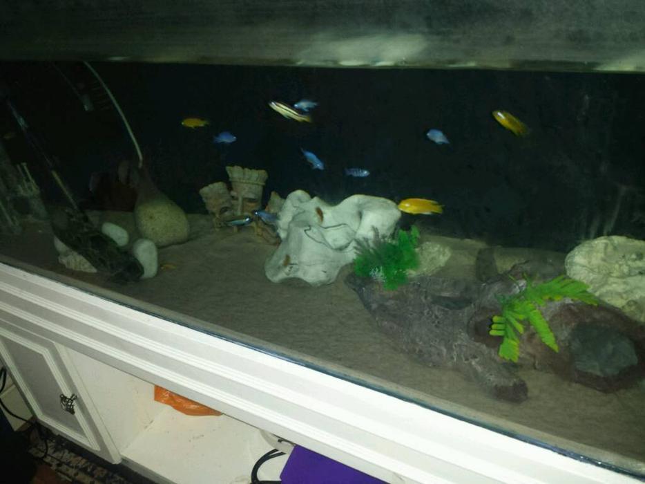 Fish tank setup 5 ft 450 litres bargain fully water tight for Fish tank full movie