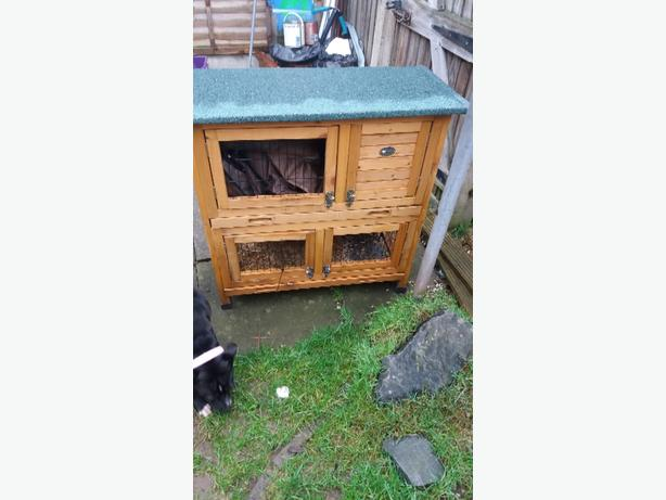 Guinea pig rabbit hutch wolverhampton dudley for Free guinea pig hutch