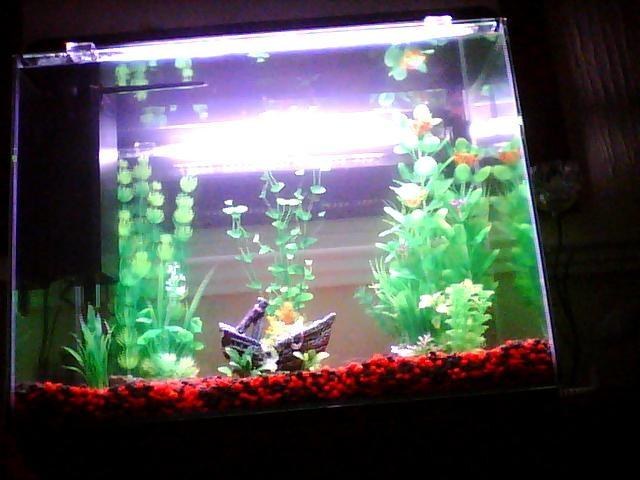 For sale home aquarium bloxwich walsall for Used fish tanks for sale