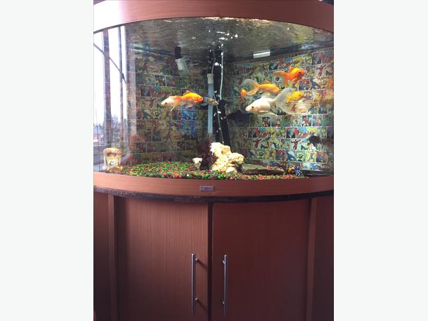 Corner fish tank for sale aldridge dudley for Corner fish tank for sale