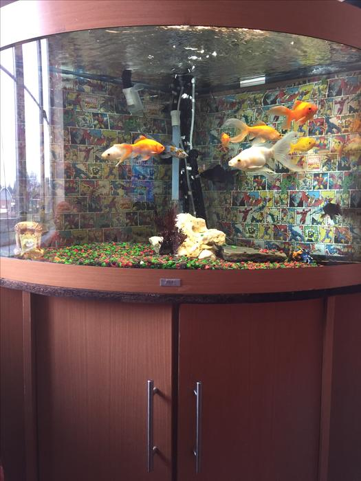 Corner fish tank for sale aldridge dudley for Used fish tanks for sale many sizes