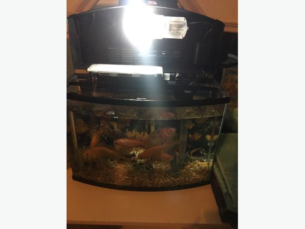 Fish tank sedgley dudley for Fish tank with built in filter