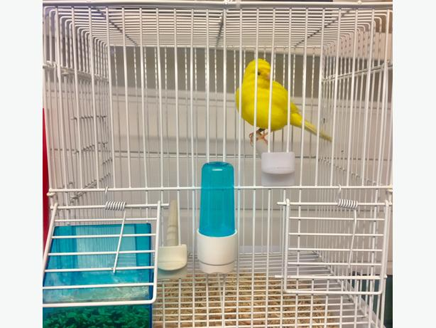 Canary & Cage