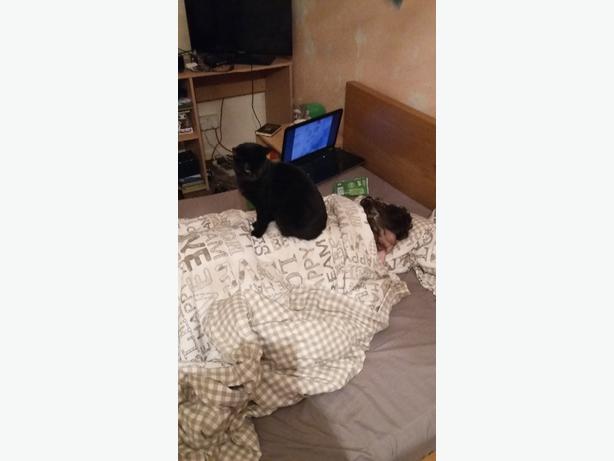 black cat male