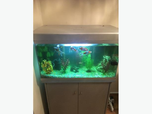 fish tank and unit