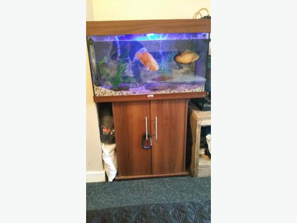 2 and a half foot tank and stand
