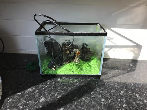 fish tank starter set up