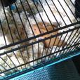 Hamster's