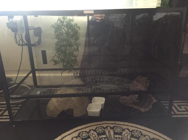 komodo reptile tank