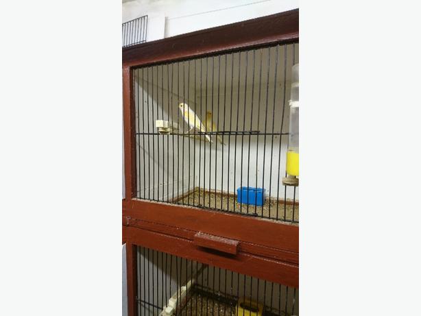 Dimorphic canaries