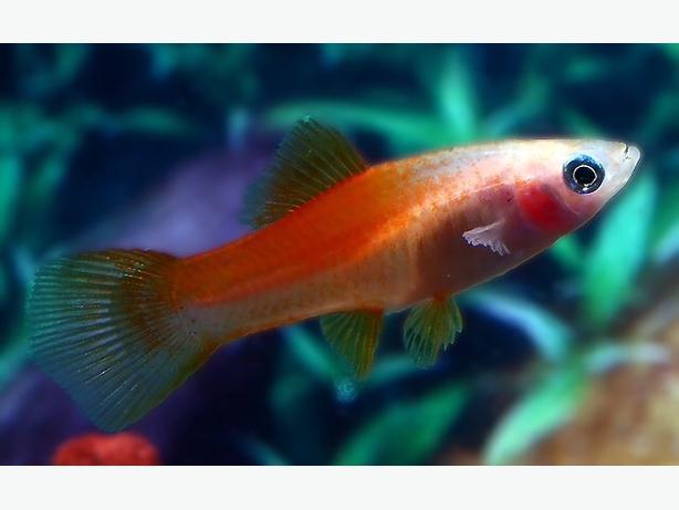 Fish Bundle
