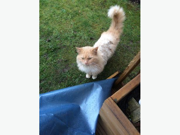 cat found in willenhall