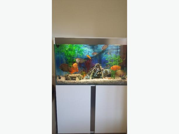 ciano fish tank