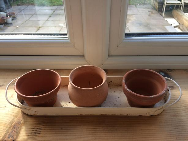 3 small clay plant pots in cream metal tray