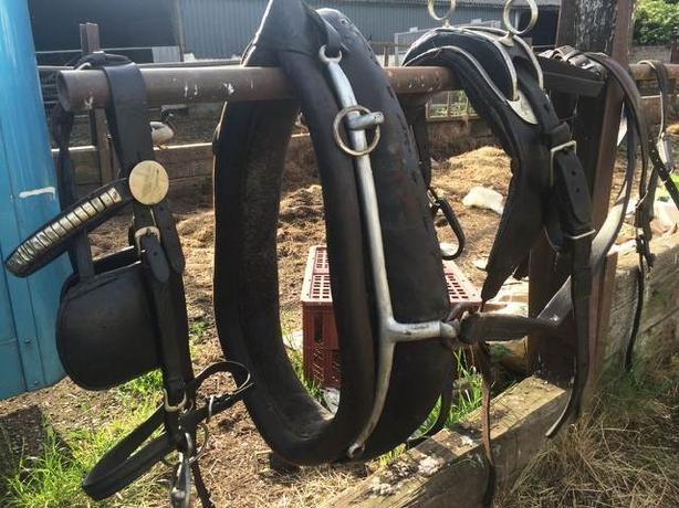 Horses to harness