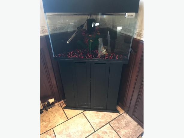 tropical corner fish tank