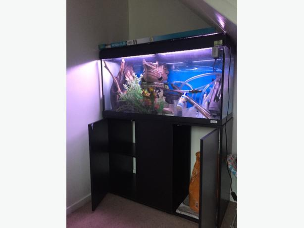 Enjoyable Fluval Roma 200 Fish Tank Full Setup Wolverhampton Download Free Architecture Designs Scobabritishbridgeorg