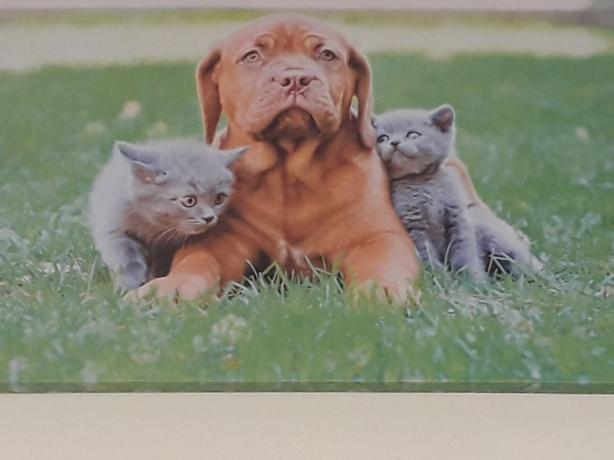 Dog and kittens canvas