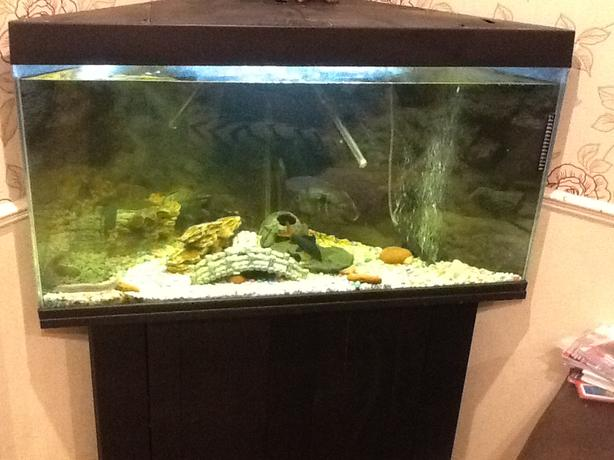 Corner fish tank complete set up