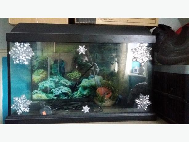 fish tank 2ft 18 in by 12 in