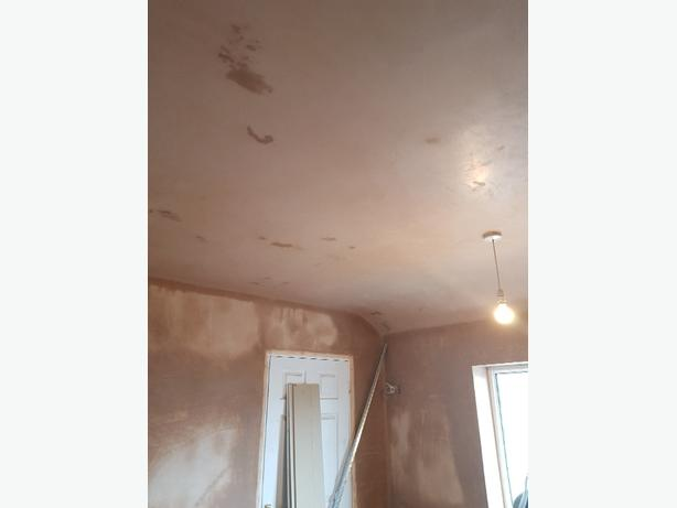 Ants Plastering services
