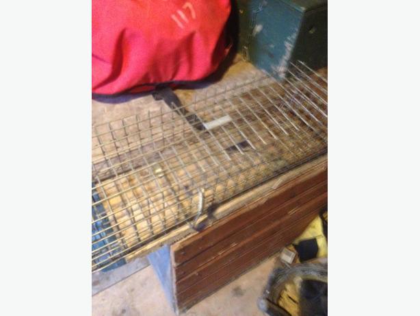 live rat trap