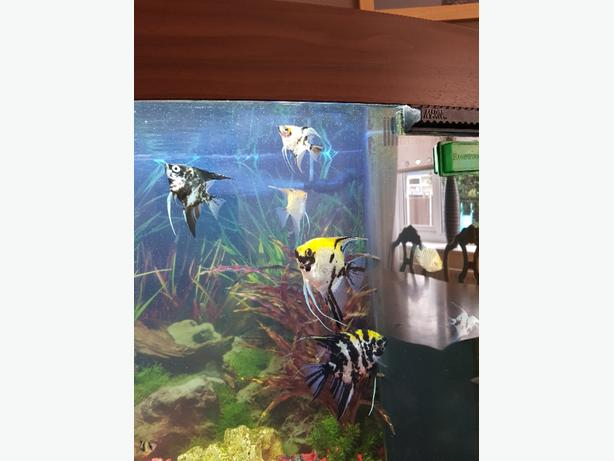 FREE FREE FREE Tropical fish