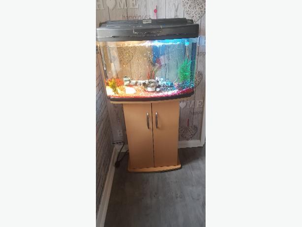 tropical fish ful set up
