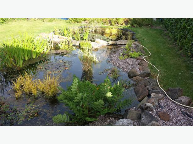 pond pumps shall and large