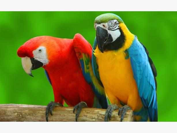 WANTED: UNWANTED PARROTS AND DOMESTIC BIRDS