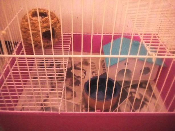  Log In needed £10 · small hamster cage