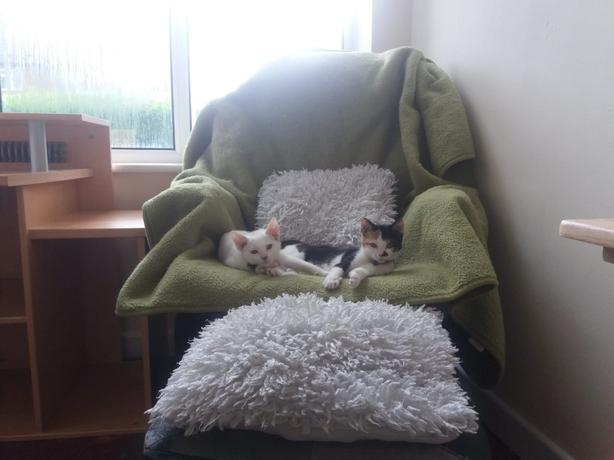 15 week old male and female kitten for sale