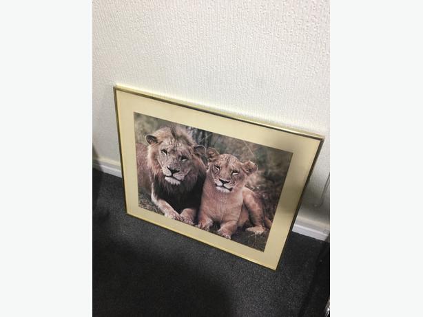 Lion picturt