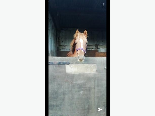 project pony 13hh