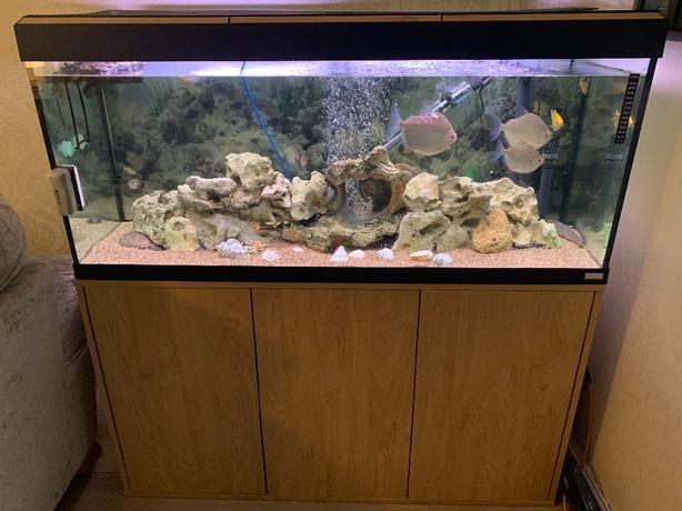 fluval 305 aquarium with tropical fish and turtle