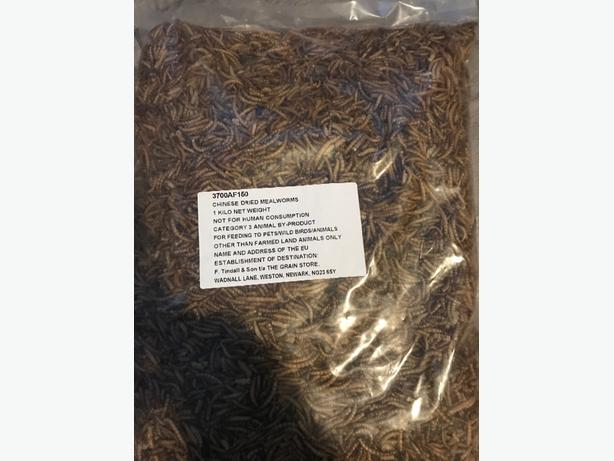 Bird food. Dried mealworms