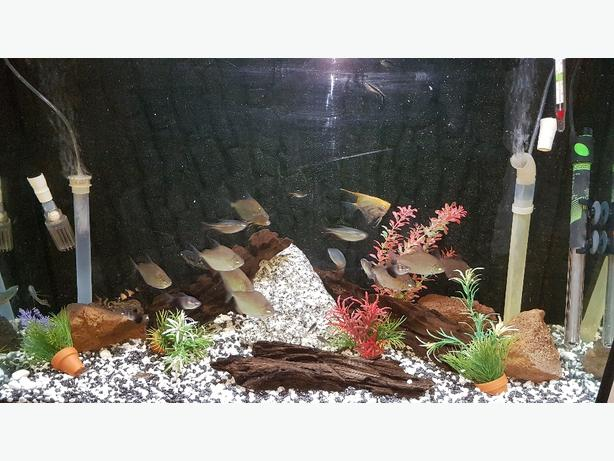 fish tank 3an half foot fish tank